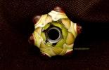 """Harlekin"" Muranoglasperle in hellgrün/weiss/Gelb/rotbraun verarbeitet als Fingerring"