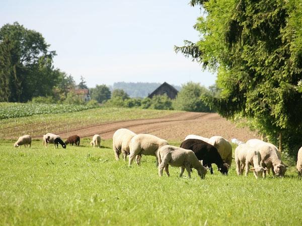 Ein Grossteil des Gemeindegebiets ist der Landwirtschaft vorbehalten.